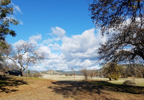 image of an empty dirt driveway with lined with large trees, in the distance in the blue sky are fluffy clouds
